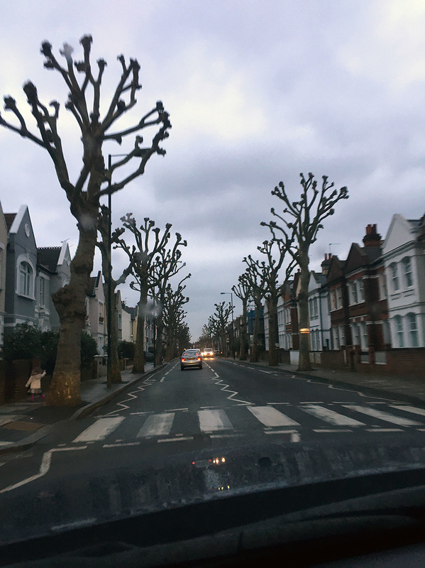 The large Tim Burtonesque trees lining some of the streets around Fulham. (Also spotted in Camden - Tily Travels.