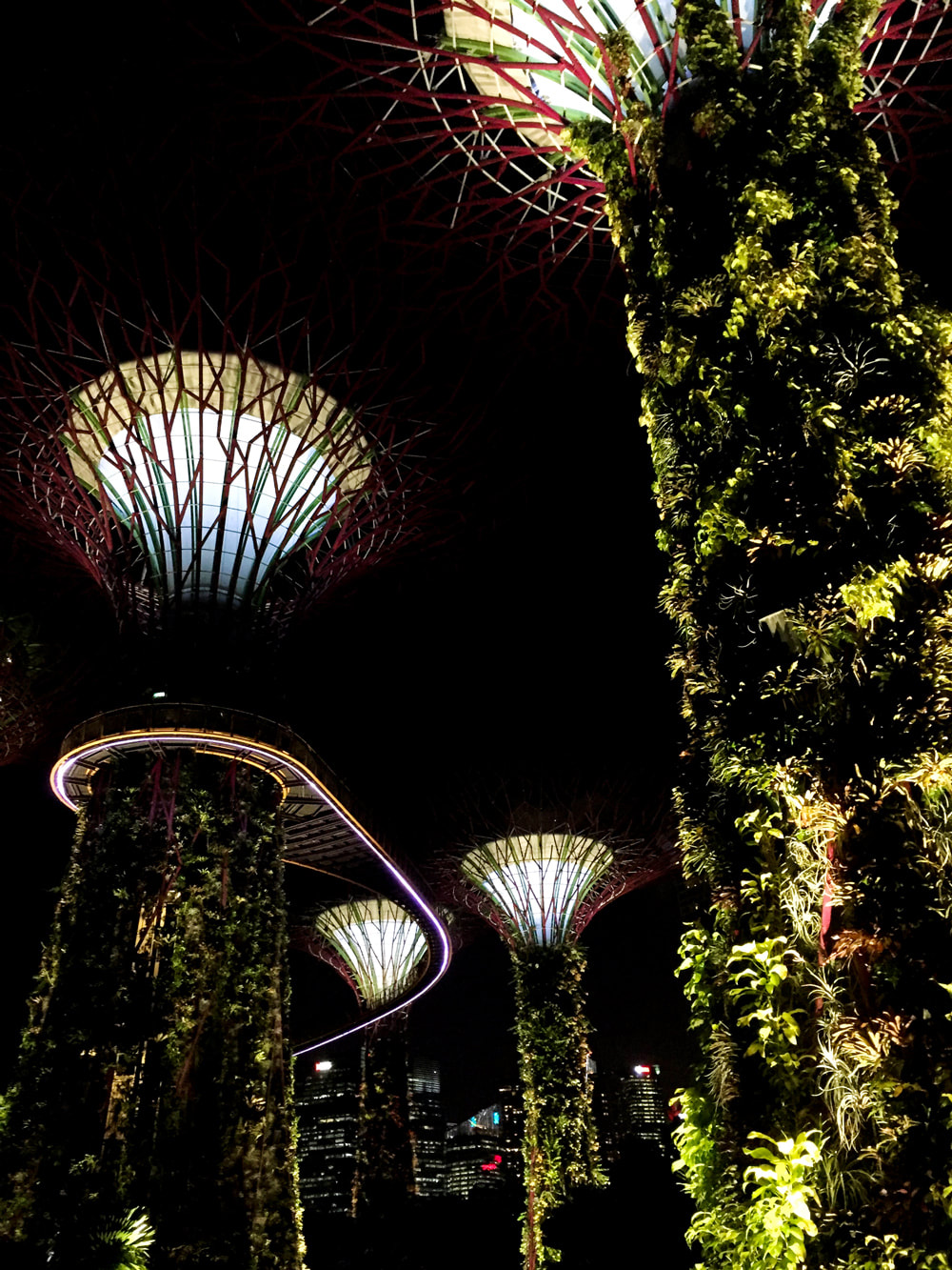 supertree grove singapore city skyline and the ocbc skyway at night gardens by the