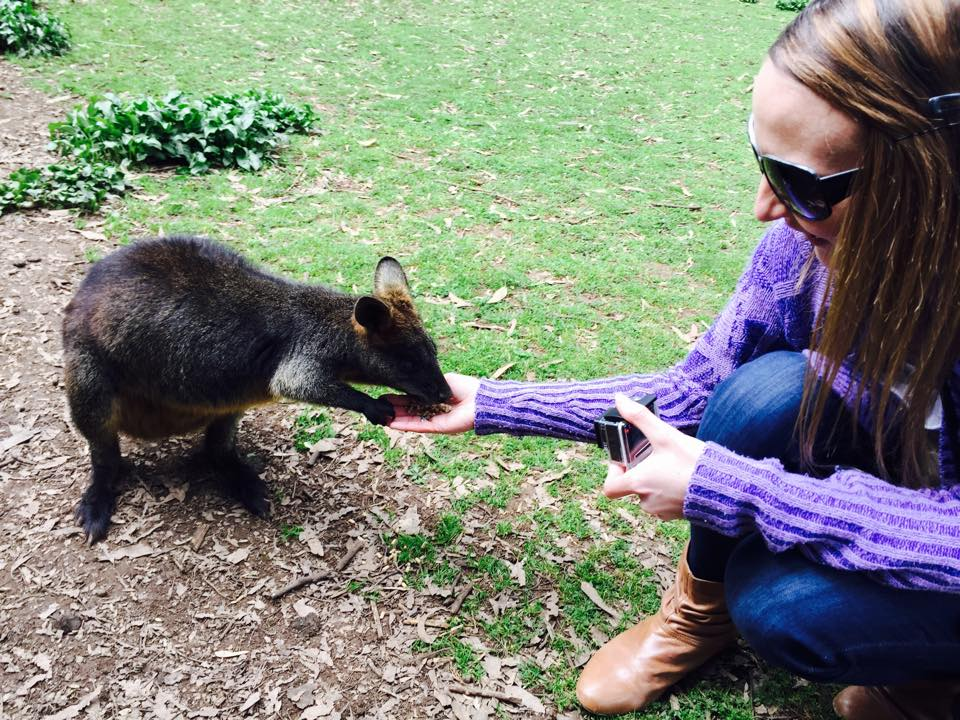 Phillip Island Wildlife Park, Feeding a pademelon. Such amazing little creatures.