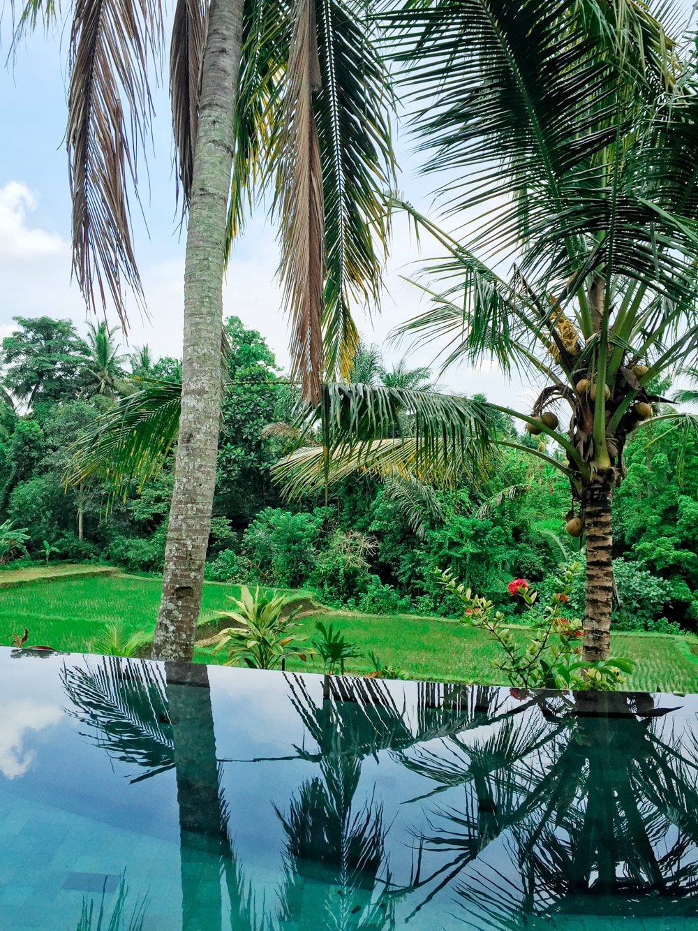 The view from the Govardana Villa's private infinity pool, overlooking rice paddy fields. Dwaraka, The Royal Villas, Ubud, Bali, Indonesia.