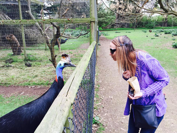 Phillip Island Wildlife Park, sizing up my opponent - Cassowary.