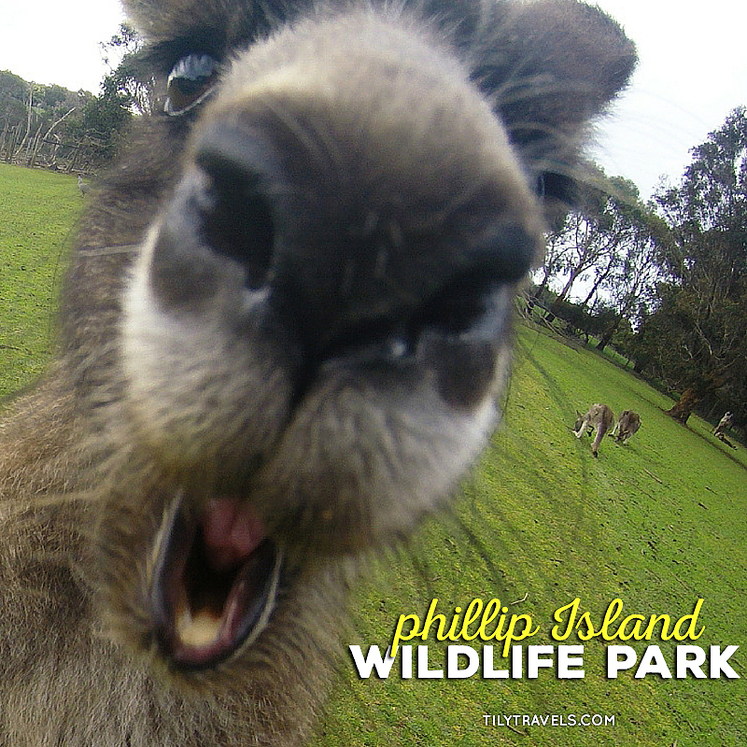 Phillip Island Wildlife Park, Phillip Island, Australia - Tily Travels.