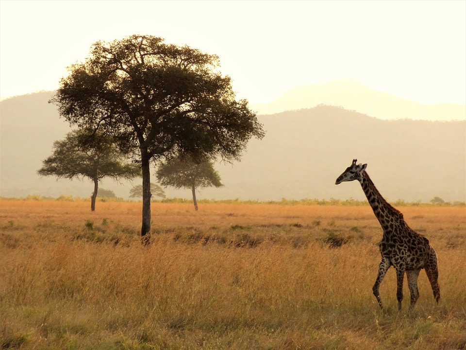 Amazing Vacation Ideas for the Intrepid Traveller Inside You - Safari adventure.
