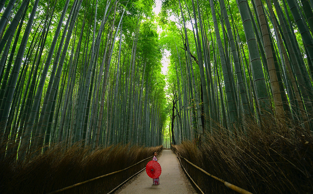 The Bamboo forest - 6 things you must do in Japan.