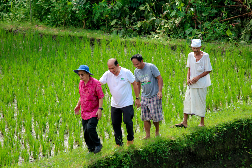 Rice paddy trekking. Dwaraka, the Royal Villas, Ubud, Bali, Indonesia.