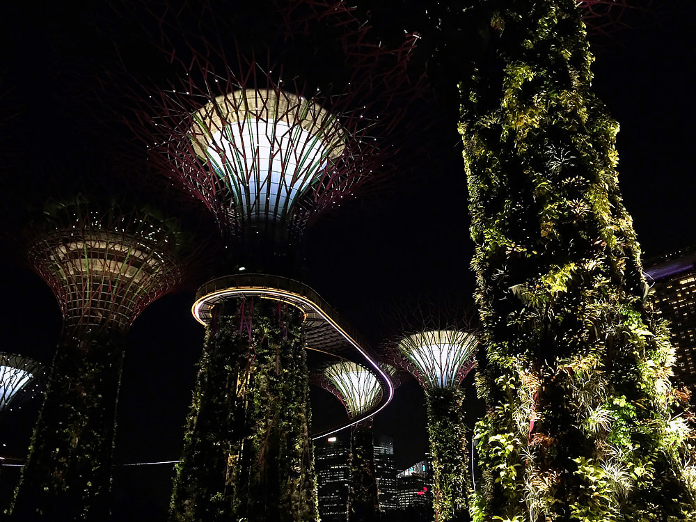 Supertree Grove, Singapore City skyline and the OCBC Skyway at night - Gardens by the Bay, Singapore.