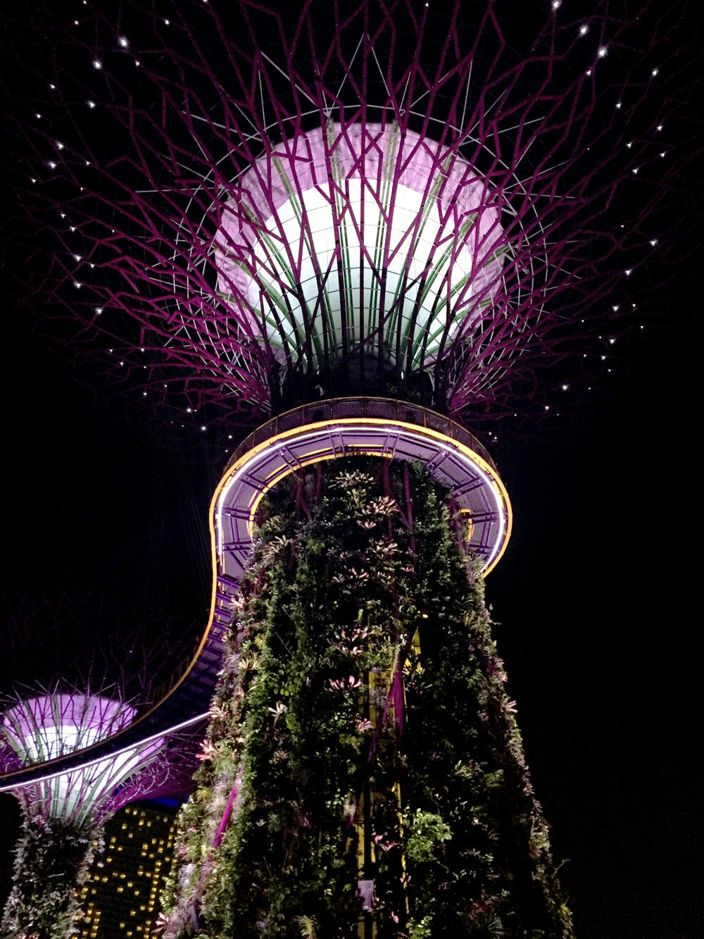 The vertical gardens at Supertree Grove and the OCBC Skyway - Gardens by the Bay, Singapore.