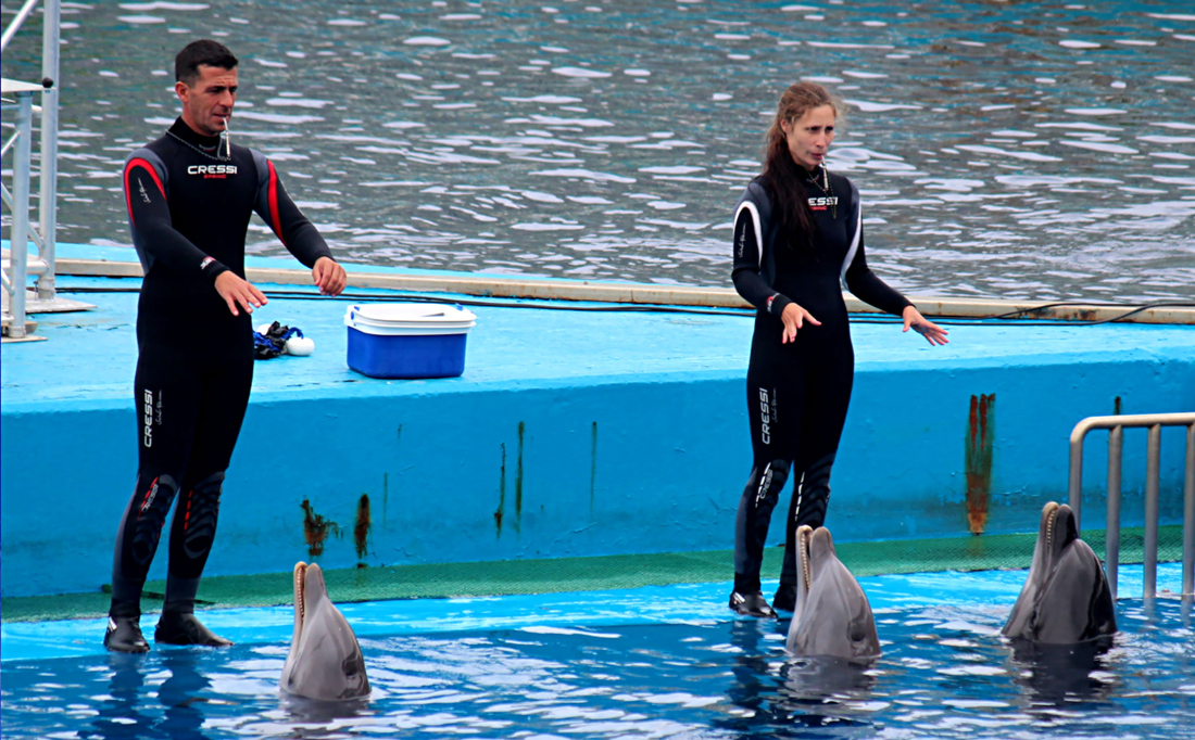 Dolphin trainers with dolphins in the pool during the show - Oceanographic, Valencia, Spain