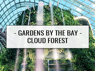 Gardens by the Bay - Cloud Forest - Singapore