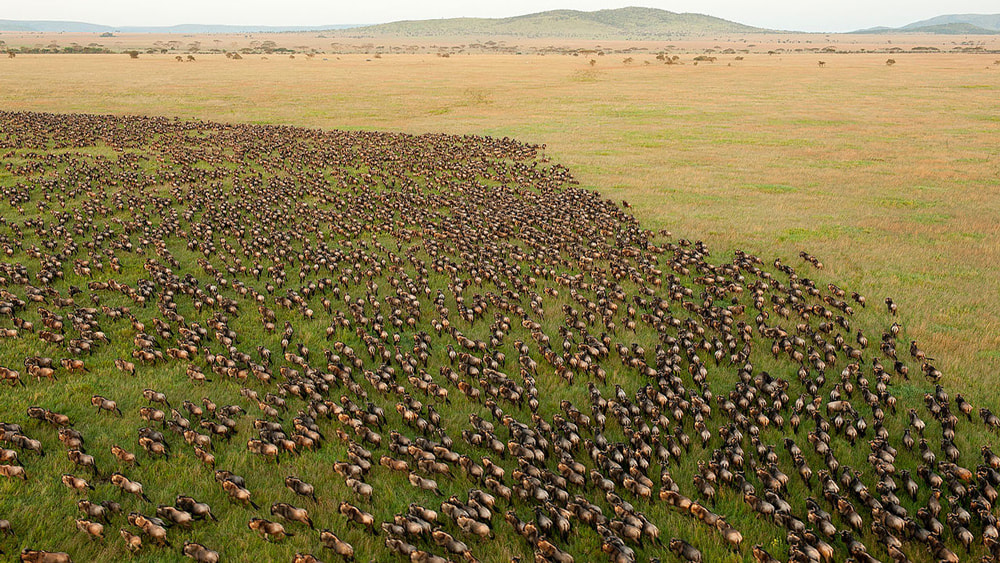 10 of the Best Places in the World to go Hot Air Ballooning: The Great Wildebeest Migrations. Serengeti National Park, Tanzania.